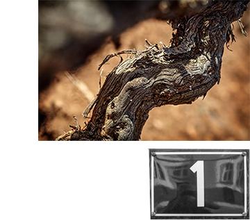 bodega-rafael-cambra-uno-vino-fontanars-valencia-a_06
