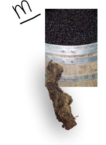 bodega-rafael-cambra-minimun-vino-fontanars-a_06